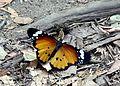 Isalo-National-Park-02.jpg