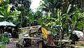 Island Life... (11106881815).jpg