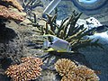 Istanbul Aquarium 34.jpg