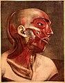 J.F. Gautier d'Agoty, Anatomie de la tete... Wellcome L0021612.jpg