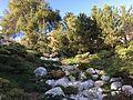 Japanese Friendship Garden (Balboa Park, San Diego) 2 2016-05-14.jpg