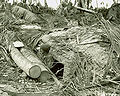 Japanese dugout at Gander Point, Makin Atoll army.mil-25120-2008-11-21-141120.jpg