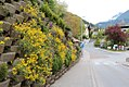 Jenbach - Ort - Straße - 2014 04 18 (1) - Blumen.jpg