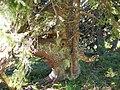 Jeseníky - panoramio (6).jpg