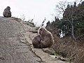 Jigokudani YaenKouen (Monky park) , 地獄谷 野猿公苑 - panoramio (33).jpg