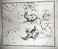 "Johannes Hevelius - Prodromus Astronomia - Volume III ""Firmamentum Sobiescianum, sive uranographia"" - Tavola CCC - Lepus et Columba.jpg"