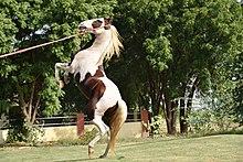 https://www.facebook.com/Horse.Ecotourism/?ref=bookmarks