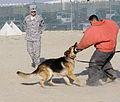 K-9 training session DVIDS235877.jpg