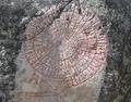 Kamień runiczny J.Wolley'a w Muoniovaara.png
