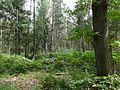 Karbower Wald (1).jpg