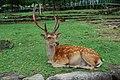 Kasuganocho, Nara, Nara Prefecture 630-8212, Japan - panoramio - jetsun (19).jpg