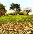 Keller Lake Golfview - Maplewood, MN - panoramio.jpg