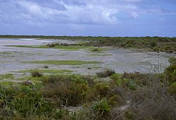 Kiritimati AKK Central Lagoon Vegetation.jpg