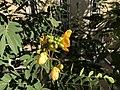 Kirkuk Flower 3.jpg