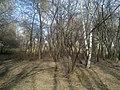 Kirovskiy rayon, Yekaterinburg, Sverdlovskaya oblast', Russia - panoramio (62).jpg
