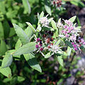 Kissimmee Prairie State Park Florida - Wildflower and Insect.jpg