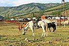 Konie mongolskie w Parku Narodowym Gorchi-Tereldż 03.JPG