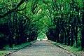 Kyoto Botanical Garden - panoramio.jpg