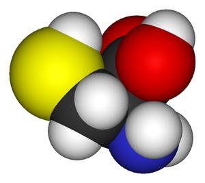 Cysteine - Image: L cysteine 3D vd W2