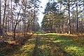 LSG Forst Rundshorn IMG 2309.jpg