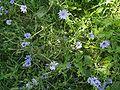 Lago-di-Endine-flora-spontanea-03.jpg