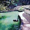 Lago dos cisnes.jpg