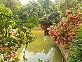 Lake's beauty in Baldha Garden.jpg
