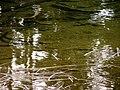 Lake (efa5e63d4f2d4ed0963877c1fb3803a5).JPG