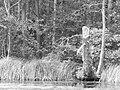 Lake Trzszczyńskie - panoramio (2).jpg