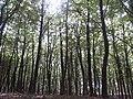 Landschap in Nationaal Park Sallandse Heuvelrug (6).jpg