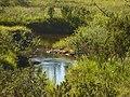 Lapland - Urho Kekkonen National Park - 20180728172316.jpg