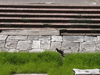 Largo di Torre Argentina cats 5.jpg