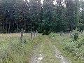 Las Adamów Stary - panoramio (1).jpg