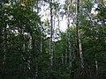 """Las w okolicach rezerwatu """"Dziki Staw"""" na Grobli - panoramio.jpg"""