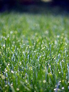 grass carl sandburg summary