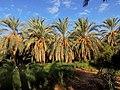 Le jardin des dattes d'Abo elkasem elwahi - panoramio (4).jpg
