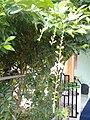 Leaves and trees palavangudi jpg 23.jpg
