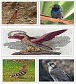 Levant's Birds.jpg