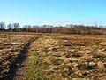 Limekiln Forest - geograph.org.uk - 316699.jpg