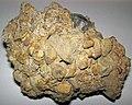 Lithic breccia (Quaternary; Flint Ridge, Ohio, USA) 2.jpg