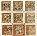 Lithops Collection - Top view - Feb. 2011.jpg