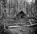 Log cabin, called Star Cabin, Snoqualmie Pass, October 15, 1896 (WAITE 124).jpeg