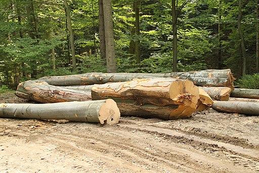 Logging Jaworzyna 02