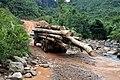 Logging in Borneo (3540116932).jpg