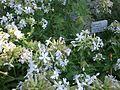 Lorto-botanico-di-padova-2016 27757185784 o 05.jpg
