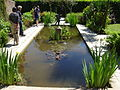 Lost Gardens of Heligan Pond.JPG
