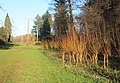 Lynford Arboretum - geograph.org.uk - 1068732.jpg