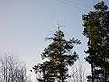 Lyovintsy, Kirovskaya oblast', Russia, 612079 - panoramio (46).jpg