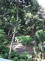 Madeira - Monte - Jardim Tropico (2092621753).jpg