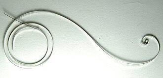 Mainspring - An uncoiled modern watch mainspring.